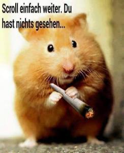 Kiff-Hamster